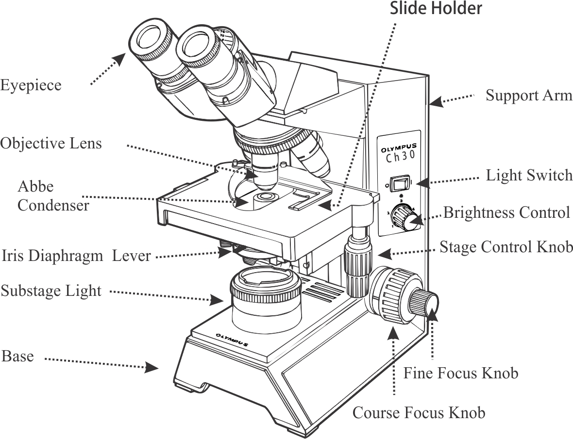 Compound Light Microscope Labeling Quiz