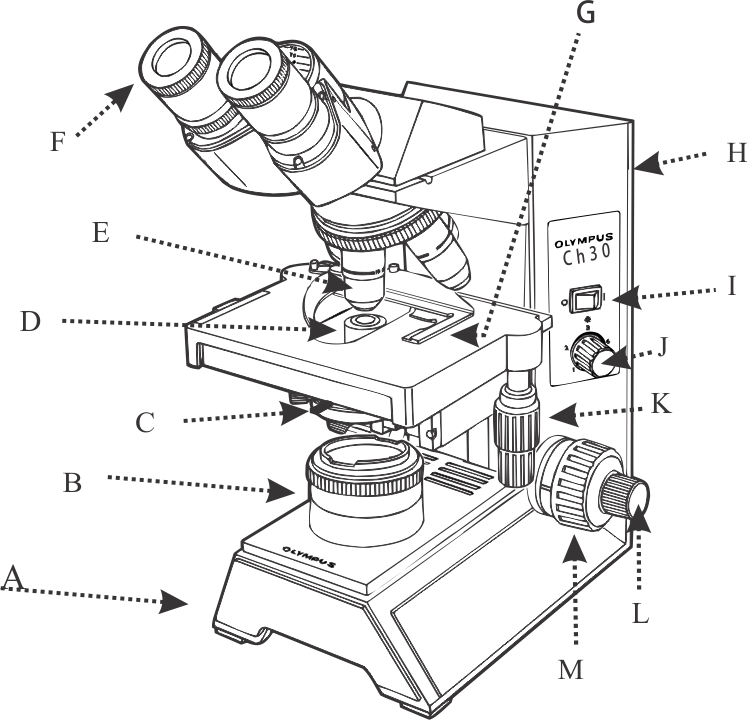 1 fully label the compound microscope below